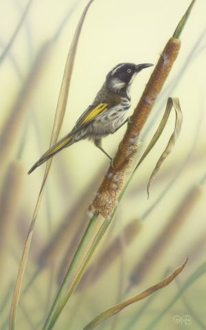 New Holland Honeyeater %26 Reeds