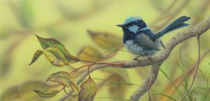 Superb Fairy Wren (Autumn Light)