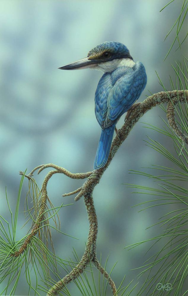 Sacred-Kingfisher-and-Pine.jpg