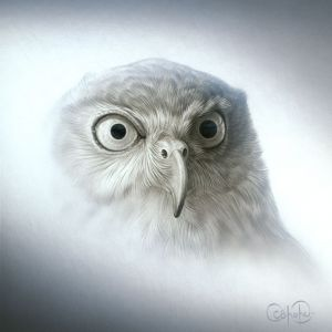 Barking Owl Portrait (2013)