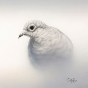 Diamond Dove Study